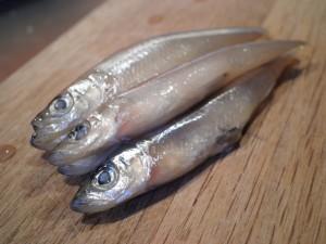 Smelt fisk